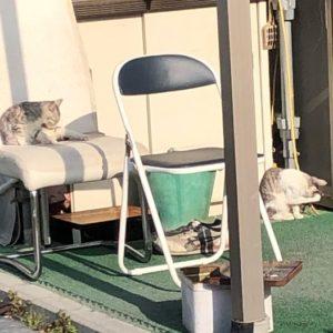 二匹の猫ちゃん